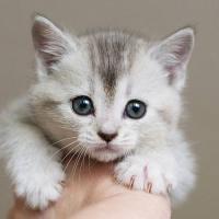 kitty29